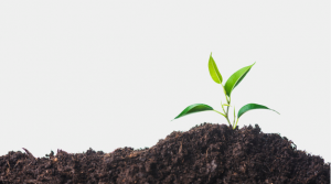 پاورپوینت فصل ششم زیست دهم(ازیاخته تا گیاه)