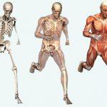 طرح درس علوم پایه پنجم حرکات بدن