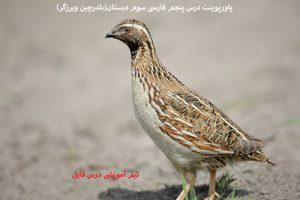 پاورپوینت درس پنجم فارسی سوم دبستان(بلدرچین وبرزگر)
